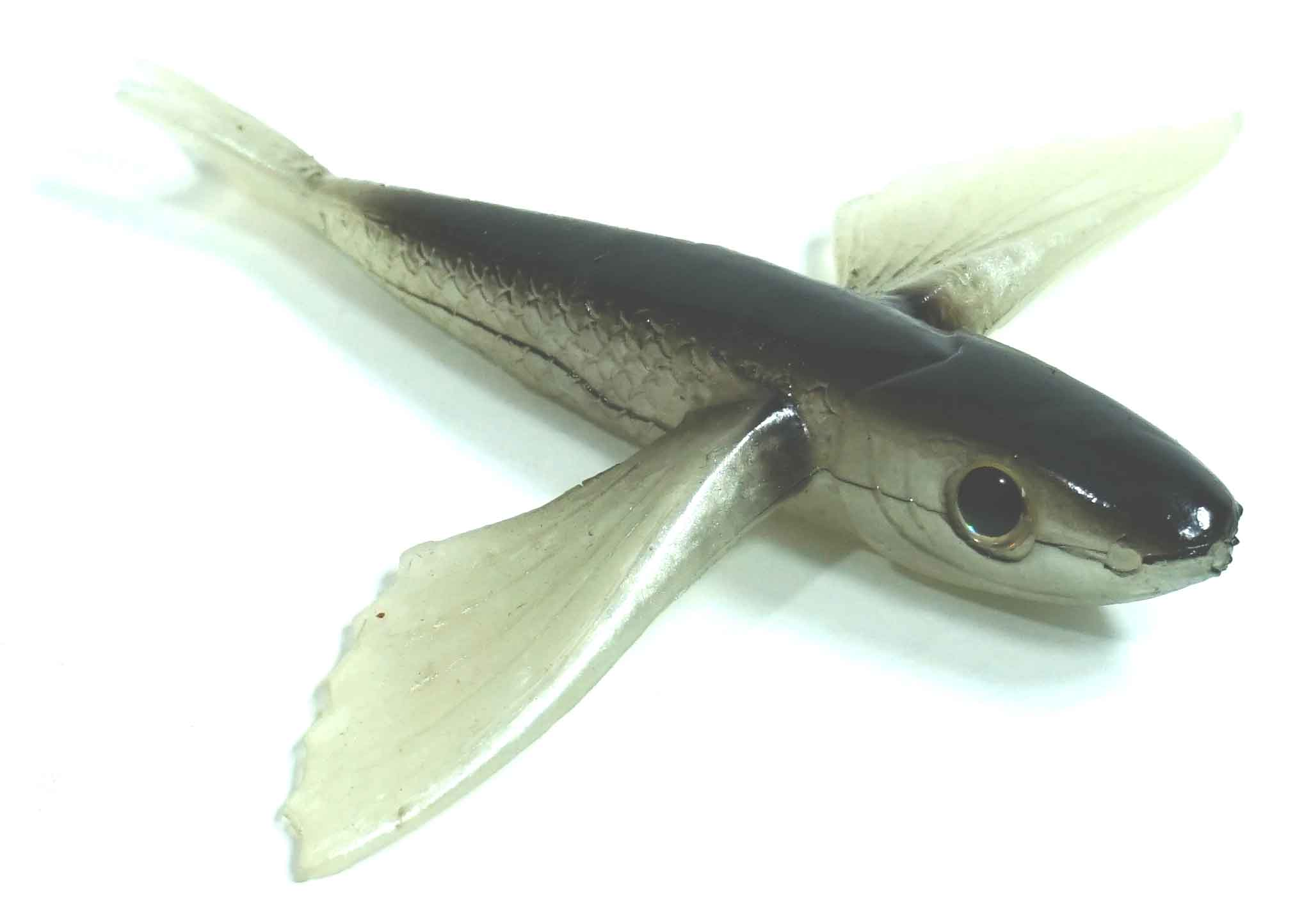 "Flying Fish Black/Clear 4"" - Almost Alive Lures"
