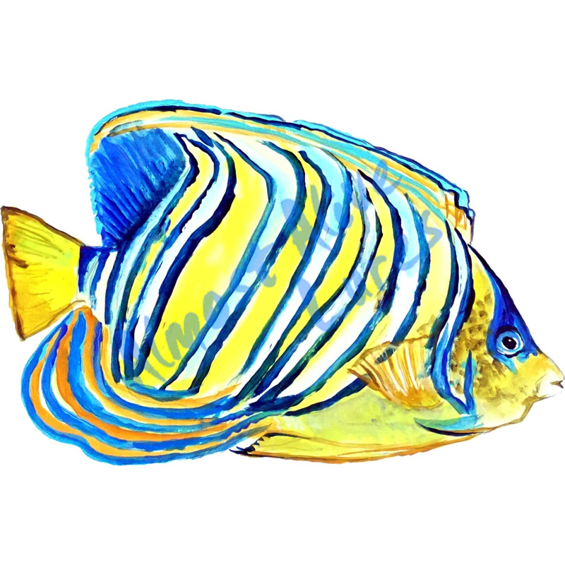 Angelfish - Printed Vinyl Decal