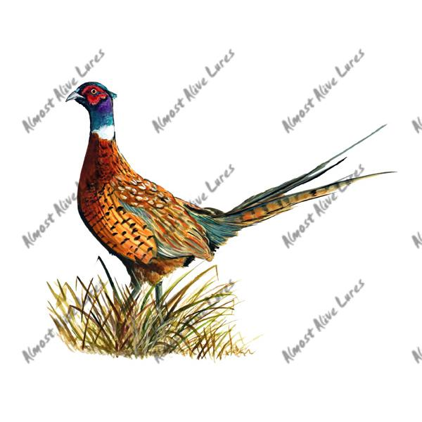 Ring Necked Pheasant - Printed Vinyl Decal