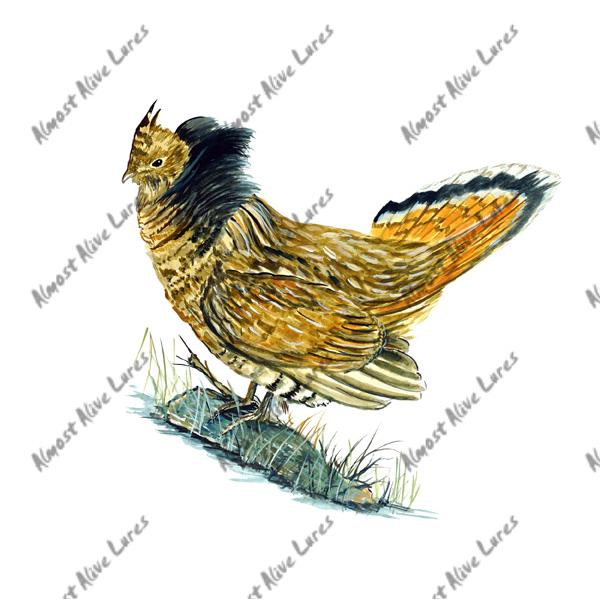 Ruffed Grouse - Printed Vinyl Decal