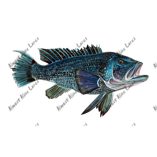 Black Sea Bass - Printed Vinyl Decal