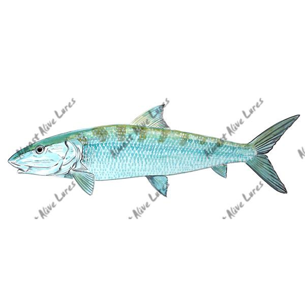 Bonefish - Printed Vinyl Decal