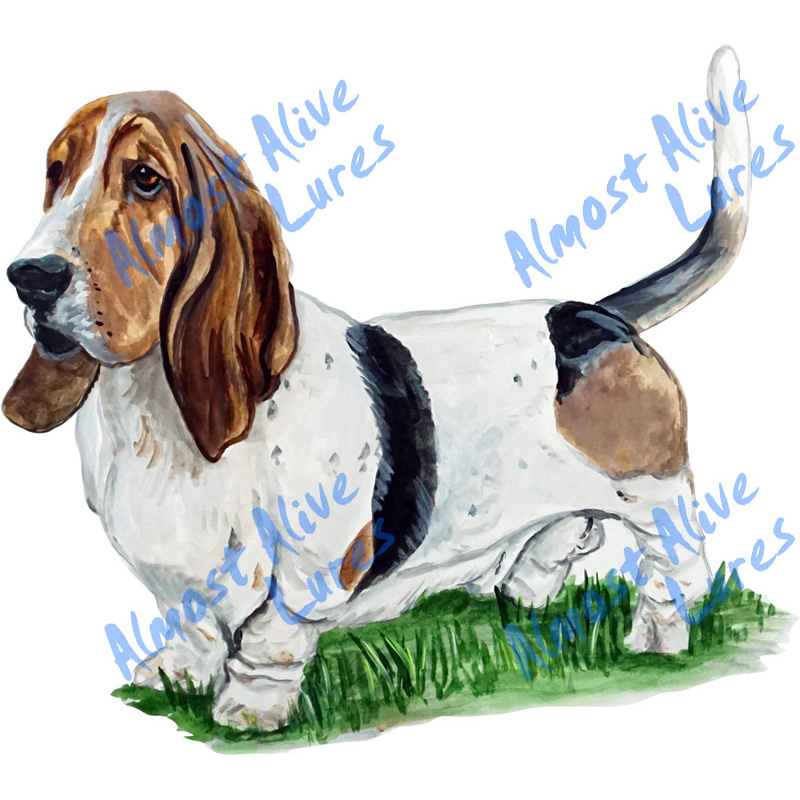 Basset Hound - Printed Vinyl Decal