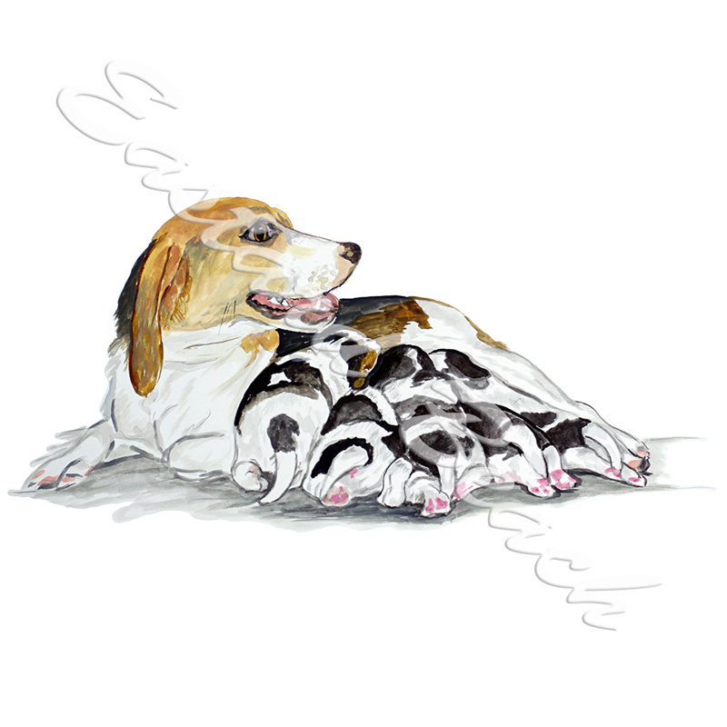 Beagle & Puppies