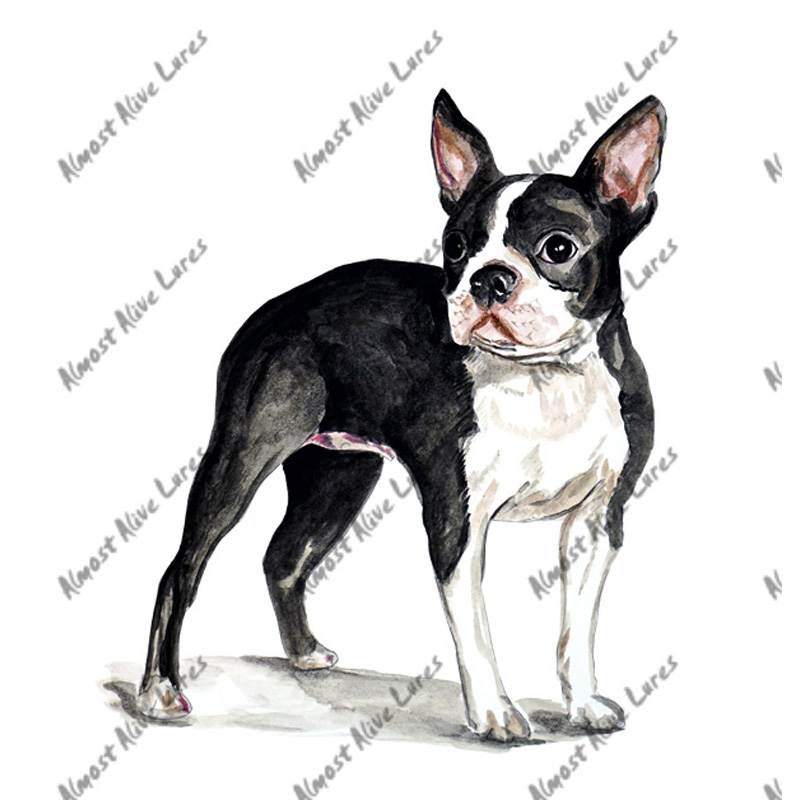 Boston Terrier - Printed Vinyl Decal
