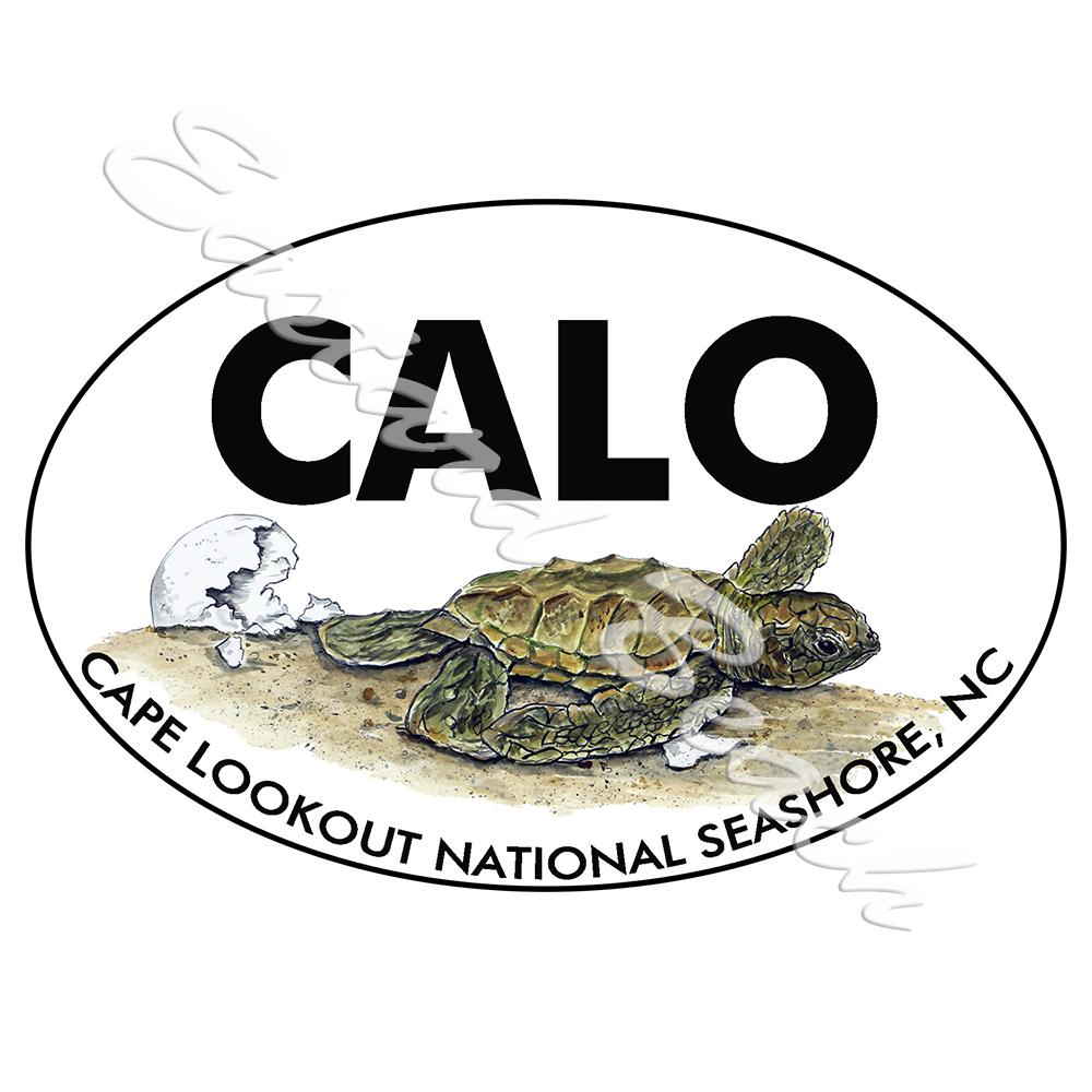 CALO - Cape Lookout - Hatchling