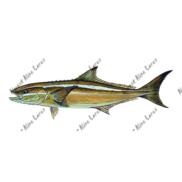 Cobia - Printed Vinyl Decal