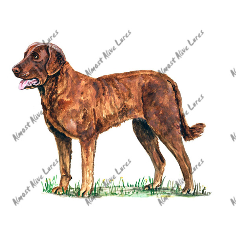 Chesapeake Bay Retriever - Printed Vinyl Decal
