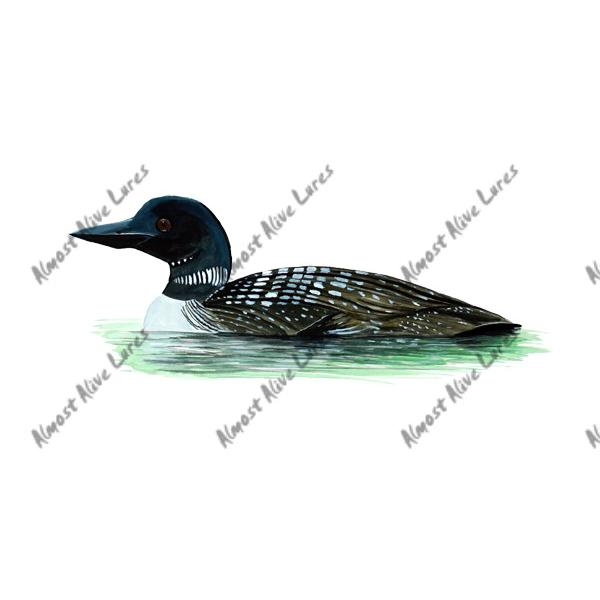Black Throated Loon - Printed Vinyl Decal
