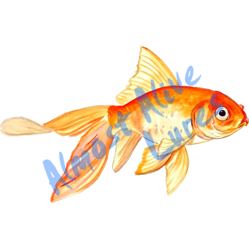 Fancy Goldfish - Printed Vinyl Decal