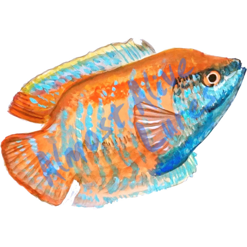 Gourami - Printed Vinyl Decal