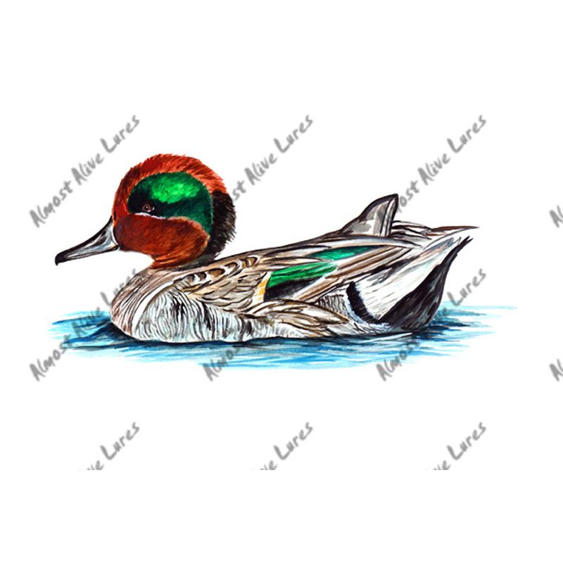 Green Winged Teal - Printed Vinyl Decal