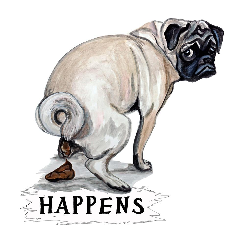 """Happens"" - Pug Pooping"