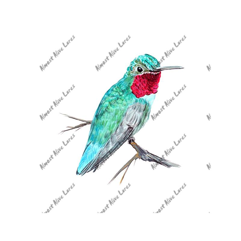Hummingbird - Printed Vinyl Decal