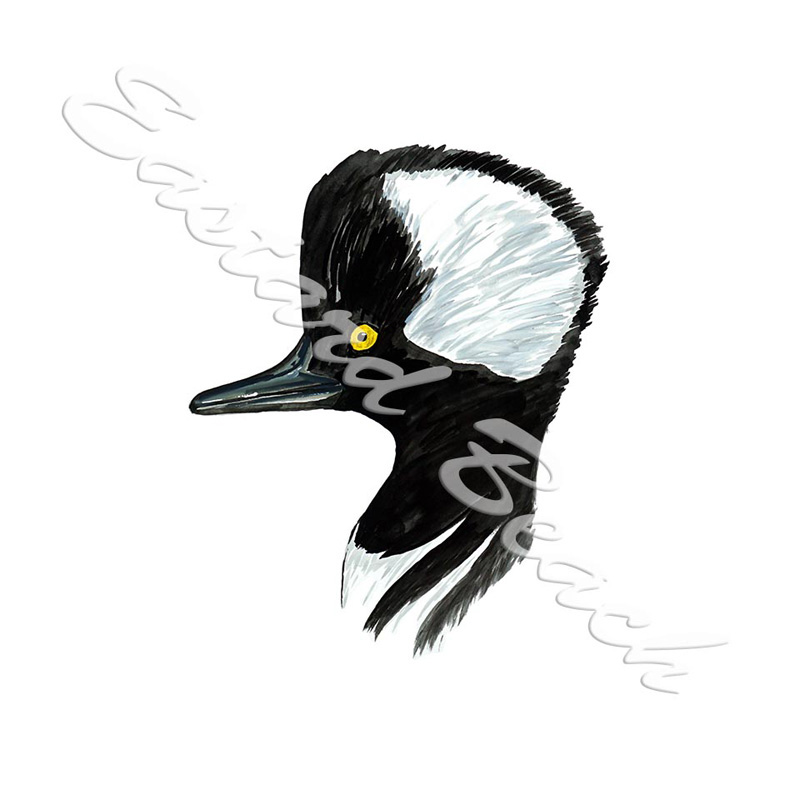 Merganser Head