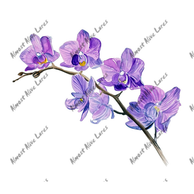 Orchid - Printed Vinyl Decal