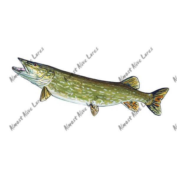 Northern Pike - Printed Vinyl Decal