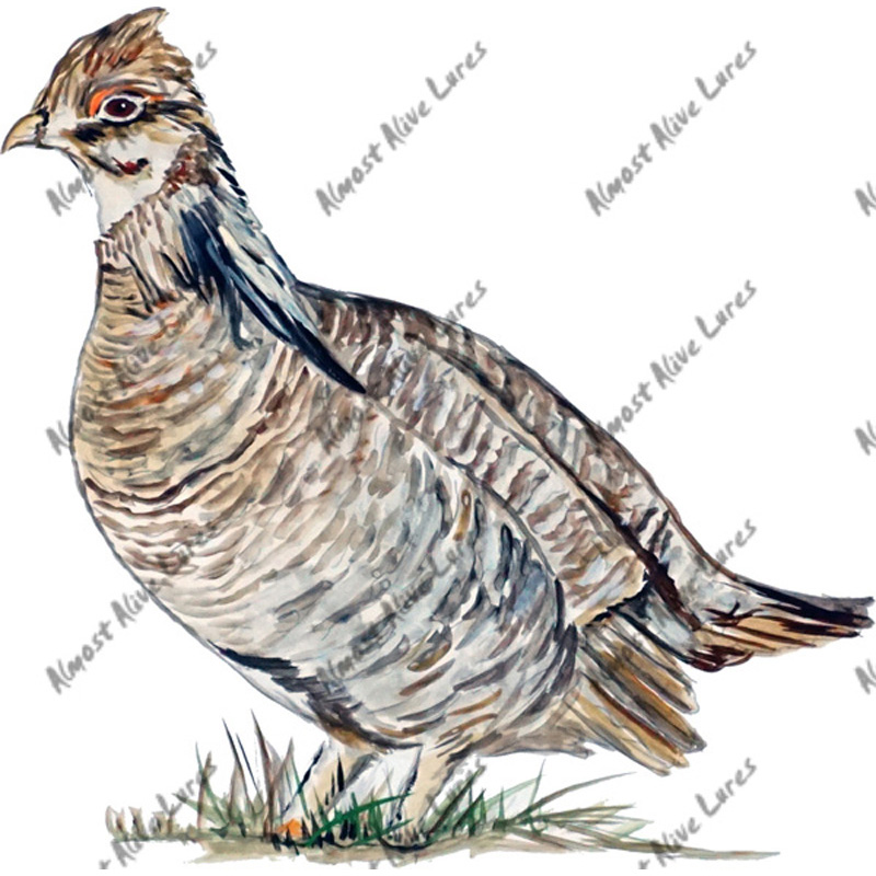 Prairie Chicken - Printed Vinyl Decal