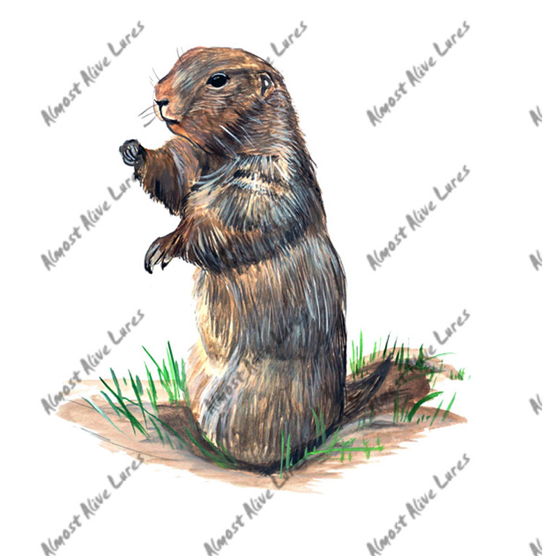 Prairie Dog - Printed Vinyl Decal