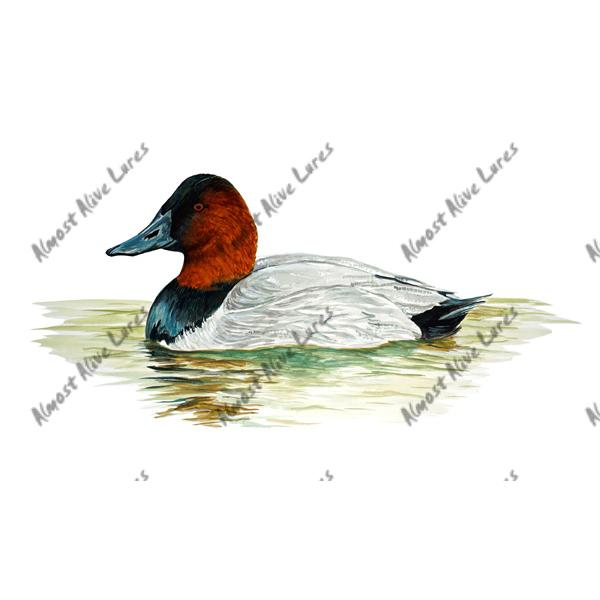 Red Headed Duck - Printed Vinyl Decal