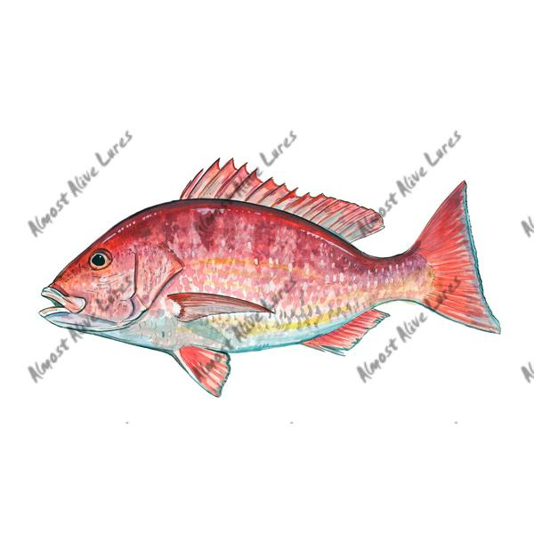 Red Snapper - Printed Vinyl Decal