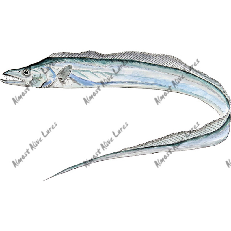 Ribbonfish - Printed Vinyl Decal
