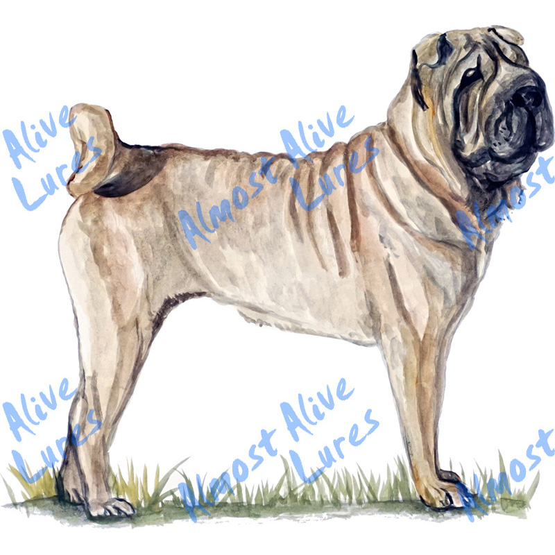 Shar Pei - Printed Vinyl Decal