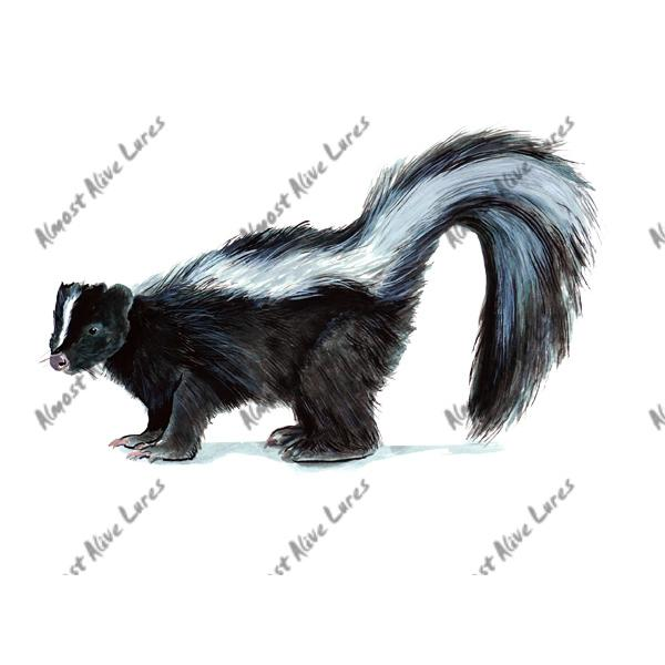 Skunk - Printed Vinyl Decal