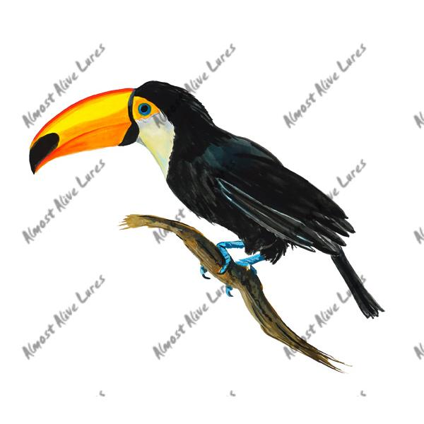 Toucan - Printed Vinyl Decal