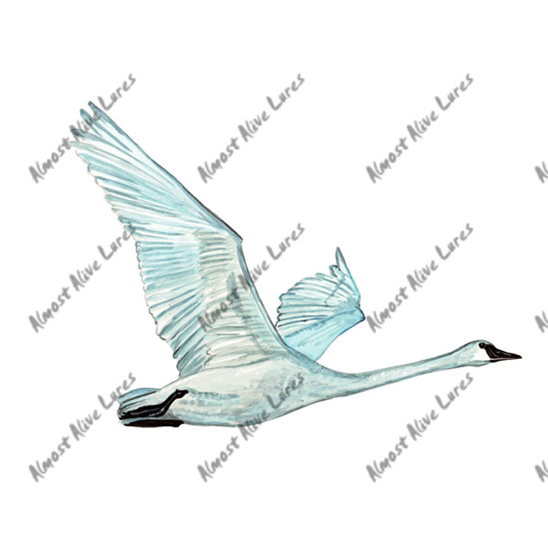 Tundra Swan - Printed Vinyl Decal