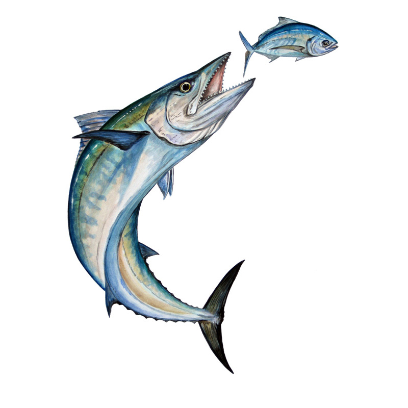 Bent Kingfish Jumbo Decal