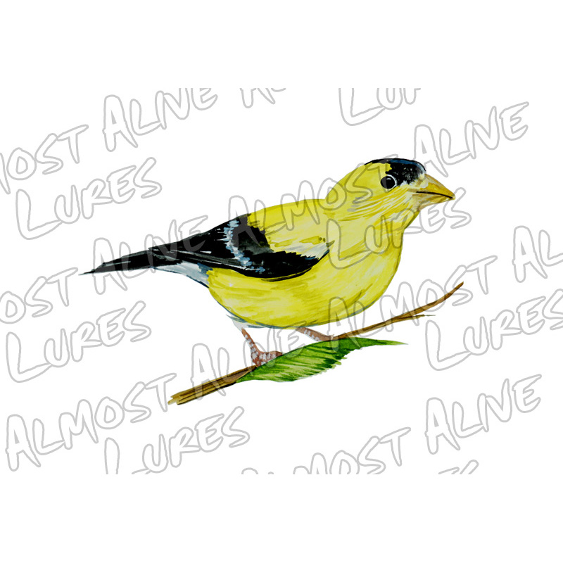 Yellow Finch - Printed Vinyl Decal