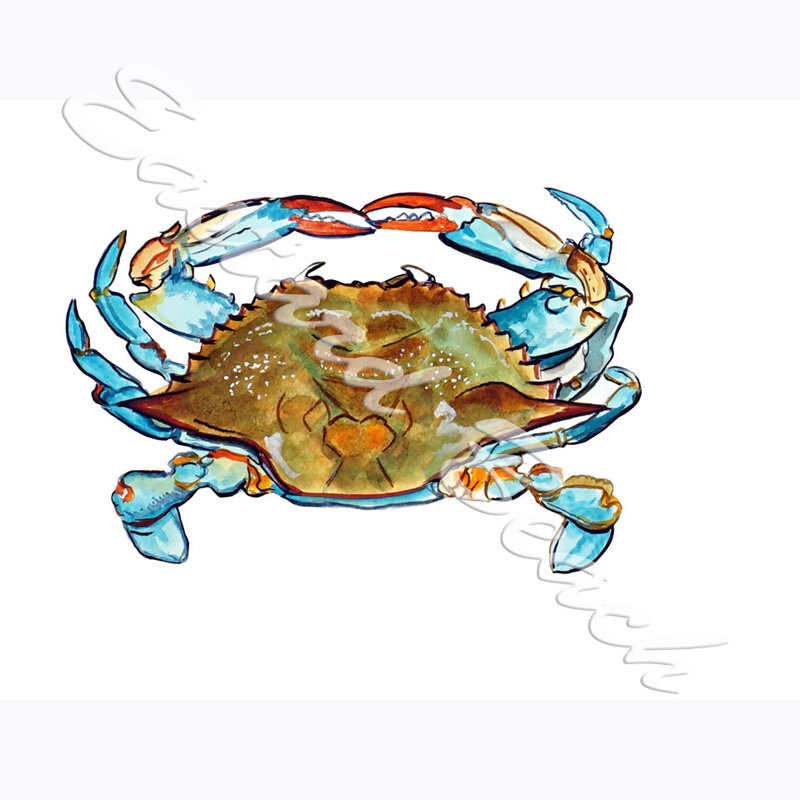 Blue Crab Overhead - 5.143 x 7.603 Inches