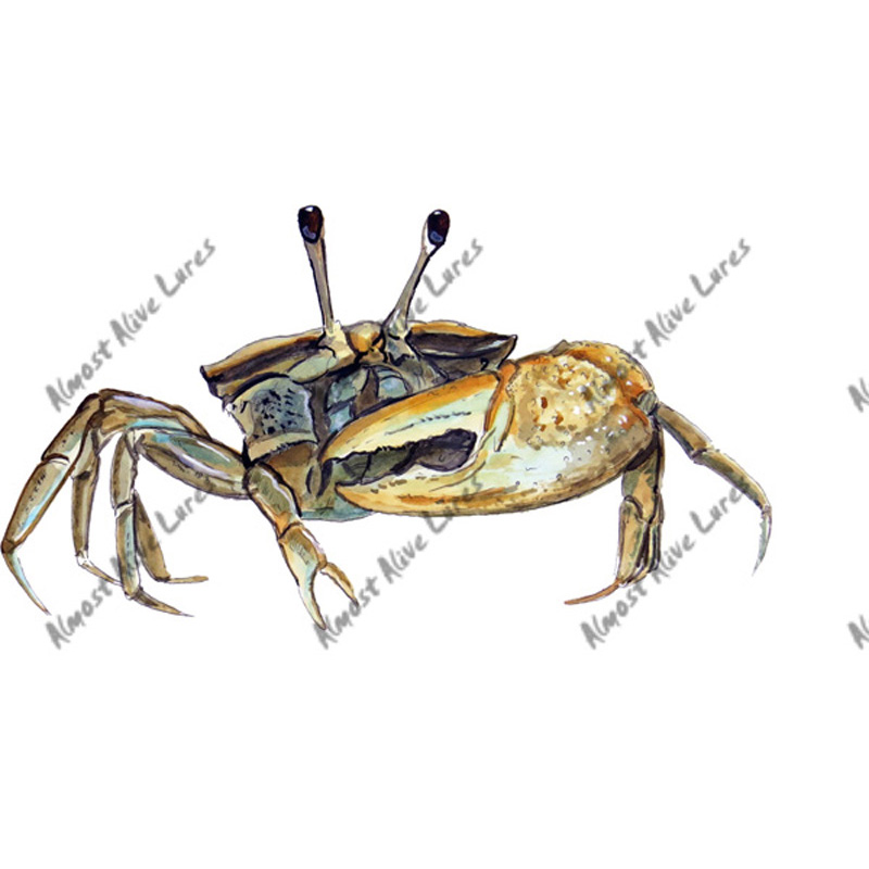 Fiddler Calling Crab - Printed Vinyl Decal