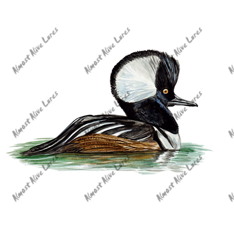 Hooded Merganser - Printed Vinyl Decal