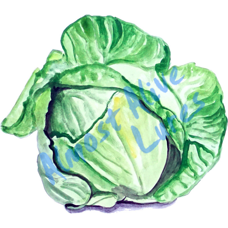 Lettuce - Printed Vinyl Decal