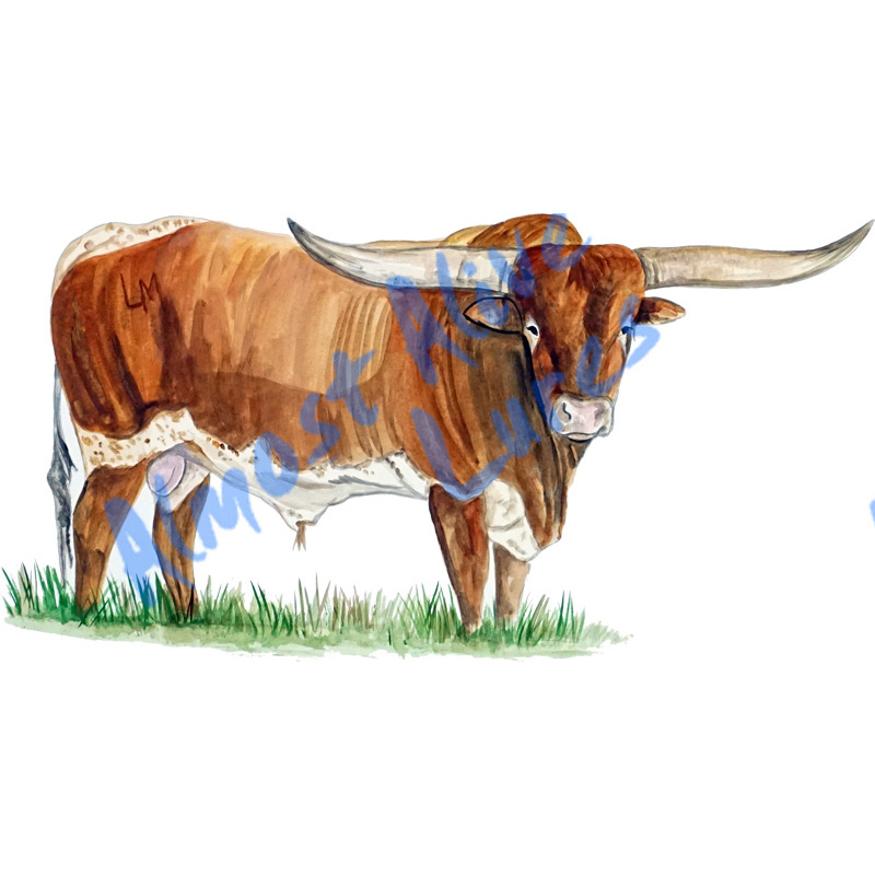 Longhorn Bull - Printed Vinyl Decal