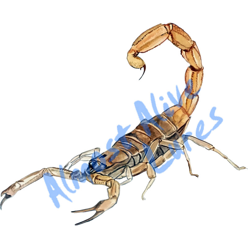 Scorpion - Printed Vinyl Decal