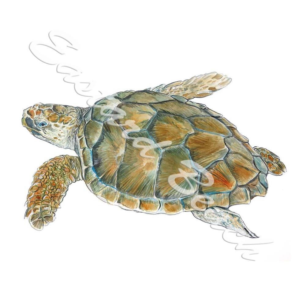 Loggerhead Sea Turtle - Printed Vinyl Decal