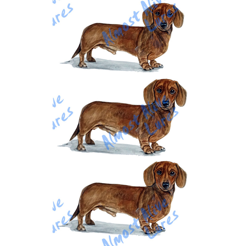 Dachshund - Printed Vinyl Decal
